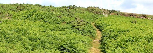 easy slog up Great Hangman, Ruth's coastal walk around the UK