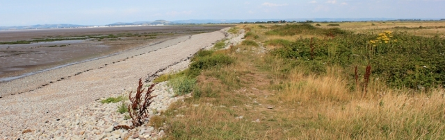 walking towards Steart, Ruth on West Somerset Coast Path, heading for Stert Point