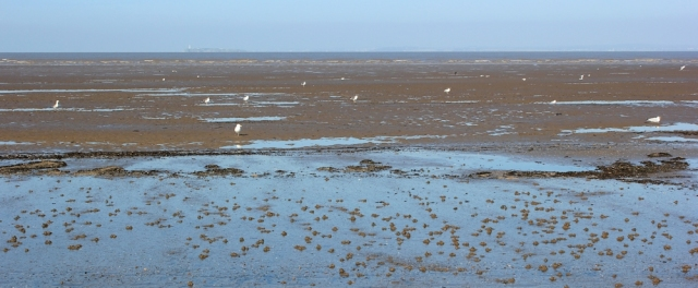 Flat Holm across the mud, Ruth walking in North Somerset, Kewstoke