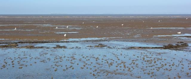 Flat Holm across the mud, Ruth walking in North Somerset, Kewstoke