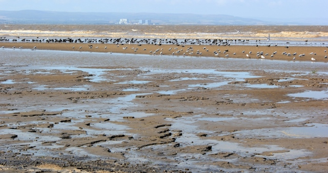 mud and birds and Hinkley Point, Ruth Livingstone