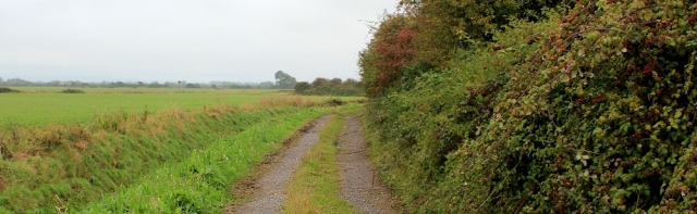 boring track, cycle route 33, Bleadon Level, Ruth walking in north Somerset