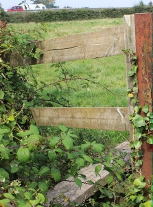 hidden stile, Ruth trying to walk in North Somerset