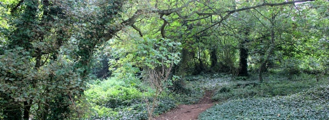 walk through East Wood, Portishead, Ruth's coastal walk