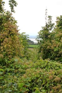 Bulwarks Iron Age Camp, view obscured, Ruth's coastal walk