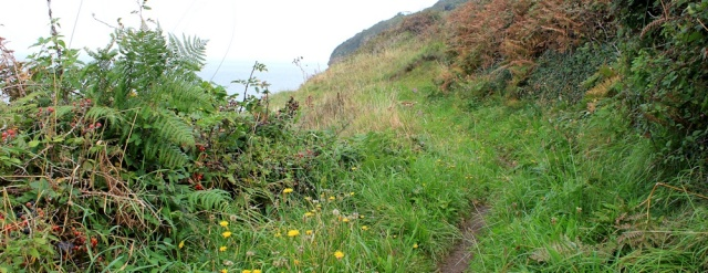 13 autumn flowers and berries, walking to Portishead, Ruth on her coastal walk
