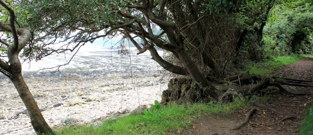 20 through trees, coast walk in Portishead, Ruth Livingstone