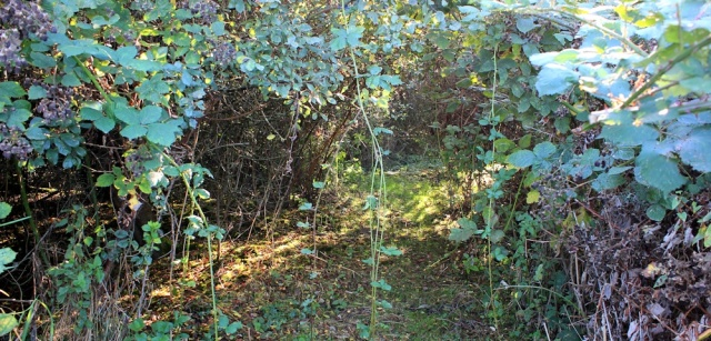 b14 path is overgrown, Severn Way, Chittering, Ruth Livingstone