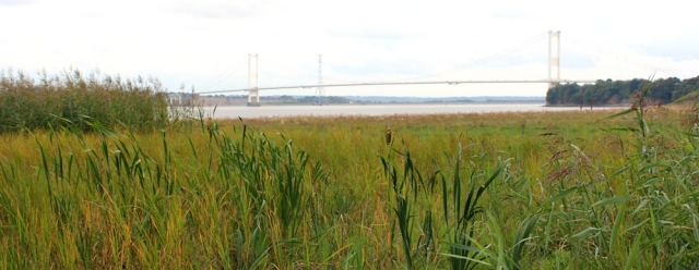 b21 Second Severn Crossing, from marshland Beachley, Ruth Livingstone