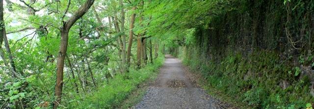 c02 Avon River Trail up the Avon Gorge, Leigh Woods, Ruth's walk
