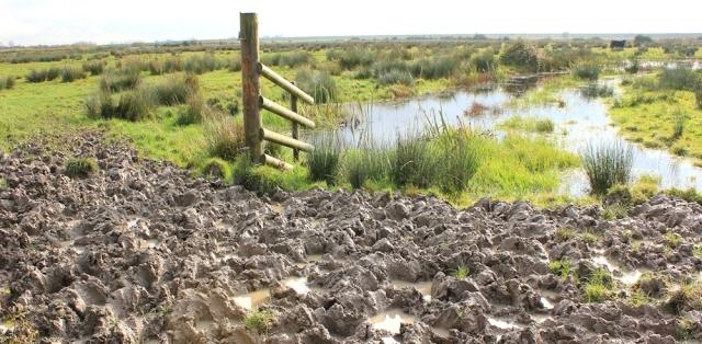 Welsh mud, Ruth on her coastal walk, near Newport