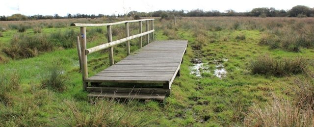 footbridges through boggy fields, Ruth walking the Wales Coast Path