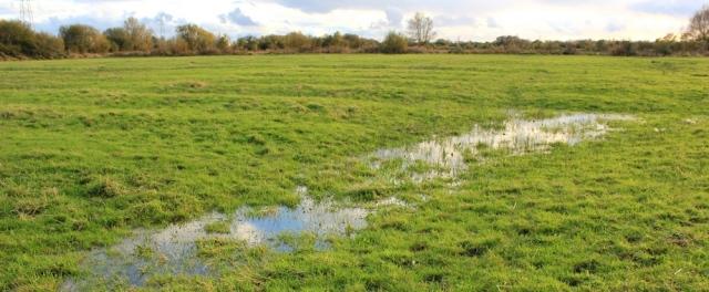 Ruth walking through waterlogged fields, Wales Coast Path, near Pye Corner