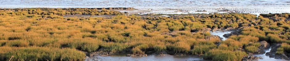header, Ruth's coastal walk, Severn Estuary, Ruth Livingstone