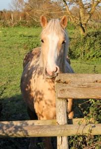 friendly horse, Ruth walking the Wales Coast Path, near Peterstone Wentlooge