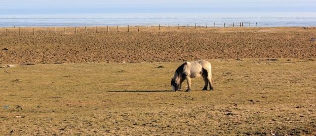 05 horses on the Wales Coast Path, Ruth walking towards Cardiff