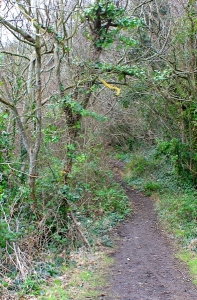 path through woods to Bulwarks Fort, Ruth walks the Wales Coast Path