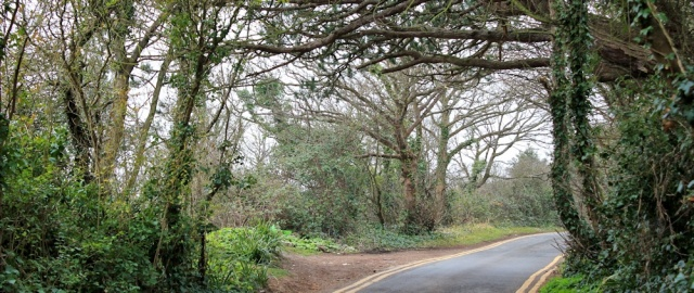 b13 road walking towards Swanbridge, Ruth on the Wales Coast Path