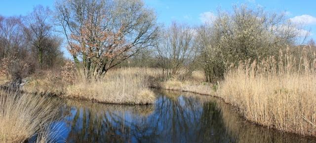 15 canal, Crymlyn Bog, Ruth Livingstone