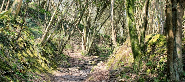 woods, Pwlldu Bay, Ruth walking the Wales Coastal path