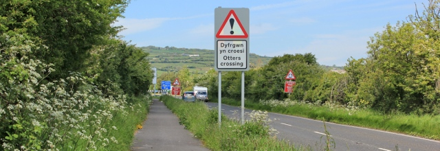 19 A484 and otters crossing, Ruth walking in Wales