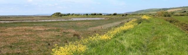 footpath near Kidwelly, Ruth walking the Welsh Coast
