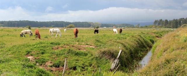 a21 past horses, Ruth walking to Pembrey