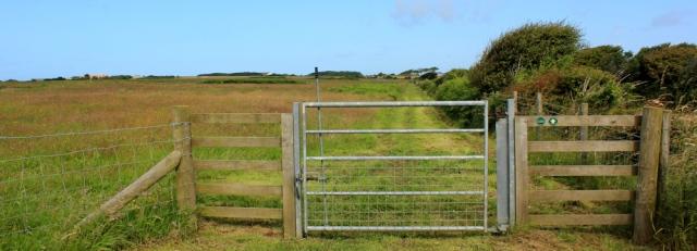 05 walking through meadows, Ruth in Castlemartin Ranges
