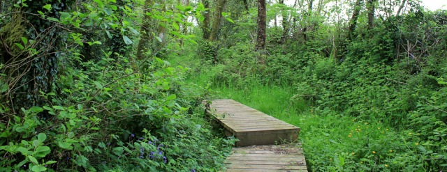 10 Wales Coast Path through woodland, Ruth in Wales