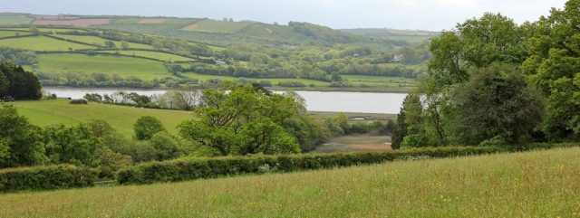11 meadows, Ruth walking down the Towy estuary to Llansteffan