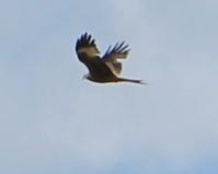 14 kite2