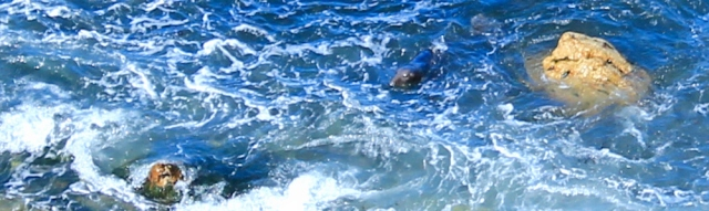 05 seal in cove, Ruth hiking Marloes pensinsula