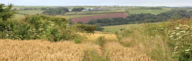 08 walking through fields towards Rickeston Bridge, Ruth's coastal walk in Wales