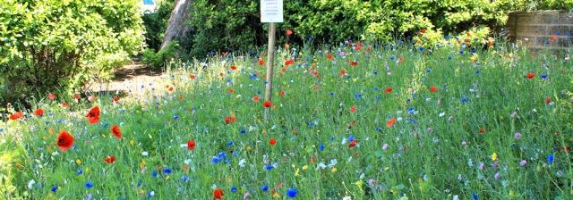 09 wild flower garden, Pembroke Dock, Ruth Livingstone