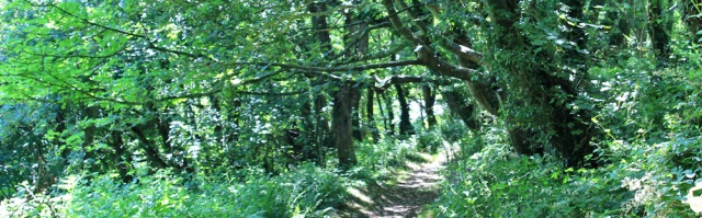 19 woodland walking towards Milford Haven
