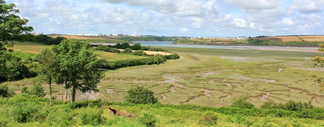 view across marsh and Pembroke River, Ruth Livingstone