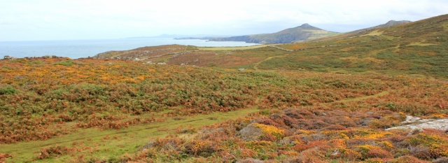 heather and moorland, St Davids, Ruth's coastal walk