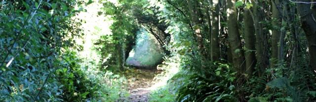 02 woodland, Ruth on Ceredigion Coast Path, Wales