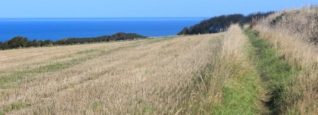 08 field diversion, Ruth's coastal walk Ceredigion Coast Path