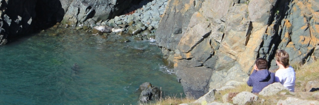 08 seal pup, below Strumble Head, Ruth's coastal walk in Wales
