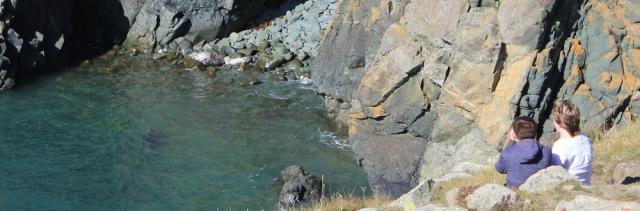 08 seal pup, below Strumble Head, Ruth's coastal walk in Wales