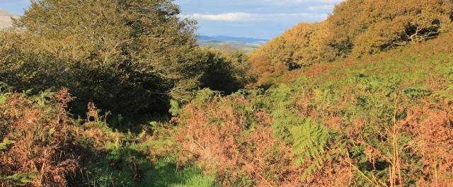 12 overgrown path, Craig Caerhedyn, Ruth trekking in Wales