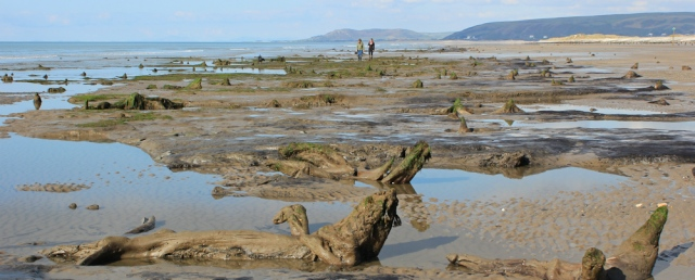 20 Submerged forest, Borth sands, Ruth Livingstone