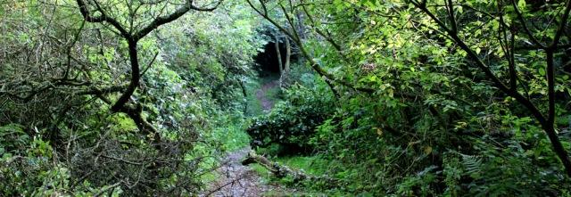 21 getting dark, Ruth walking in woods