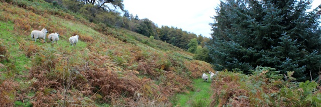 valley of the sheep, Coed Garth-Gwynion, Ruth hiking in Wales