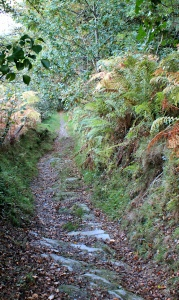 a23 ancient lane leading down to Machynlleth, Ruth walking in Wales