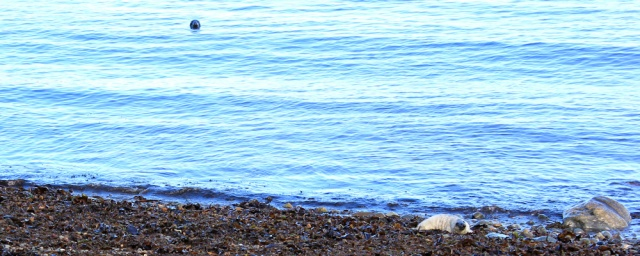 seal mum keeping an eye, Ruth Livingstone