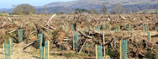 14 Ruth Livingstone, forestry industry, near Harlech