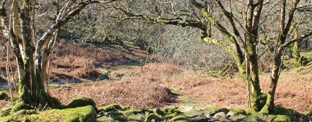 16 down through woods, Wales Coast Path, Ruth Livingstone