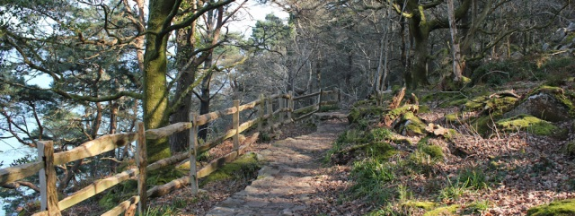 11 wooded walk Mynydd Tir-y-cwmwd, Llanbedrog, Ruth's coastal walk in Wales